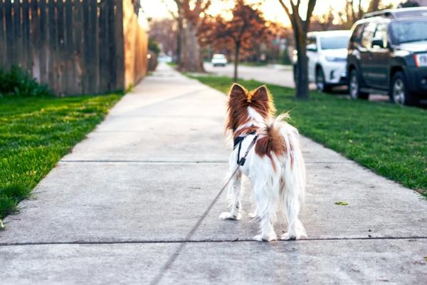 Dog Walkers Sacramento