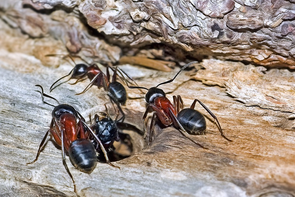 Good Pest Control Companies in Denver