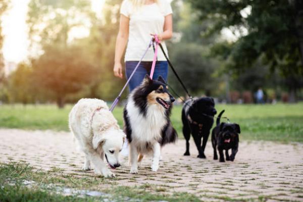 Top Pet Care Centre in Oklahoma City