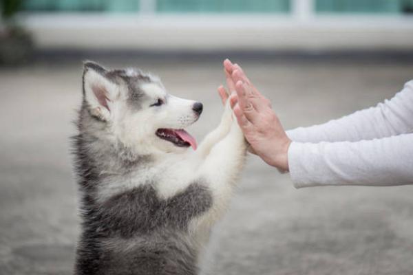Good Pet Care Centre in Oklahoma City