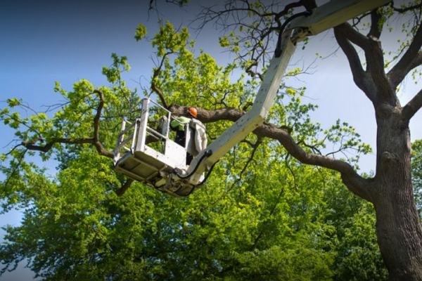 Top Tree Services in Sacramento