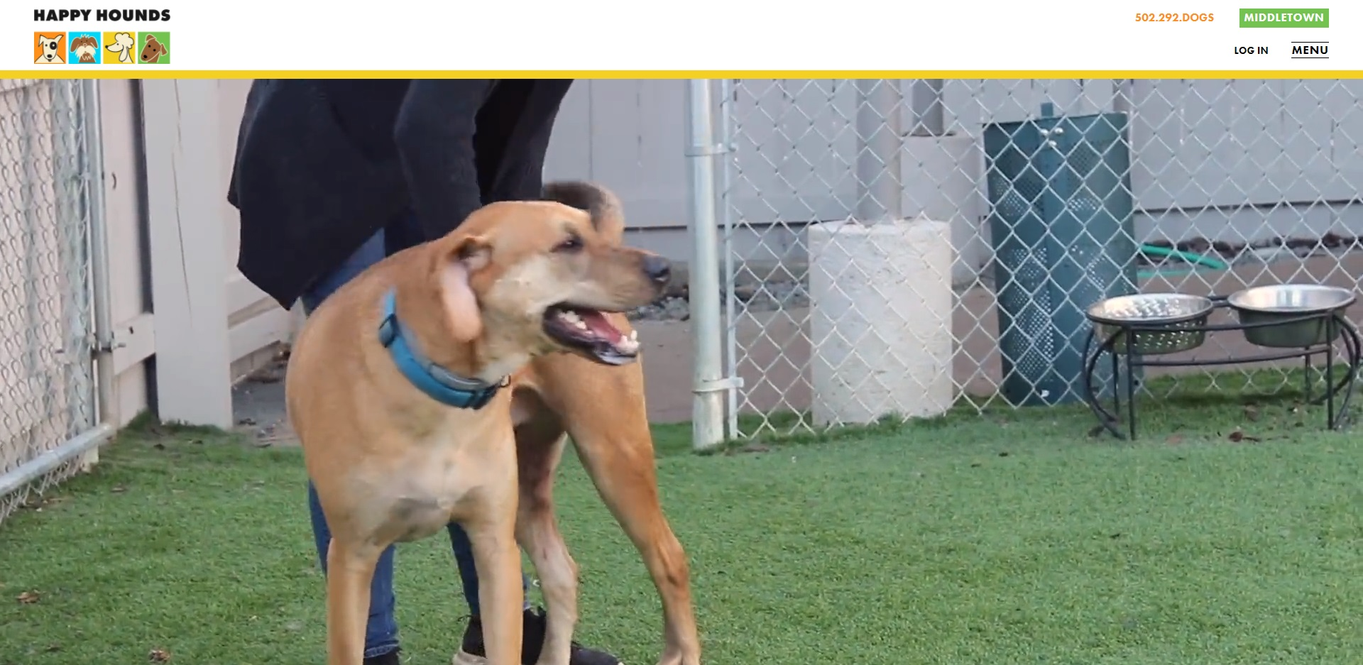 Best Doggy Day Care Centres in Louisville, KY
