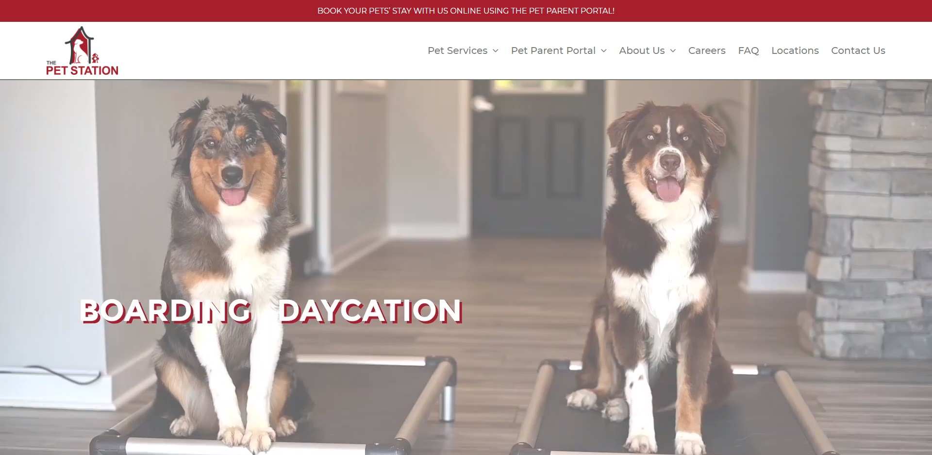 Louisville, KY's Best Doggy Day Care Centres