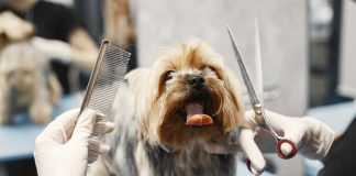 5 Best Dog Grooming in Fresno, CA
