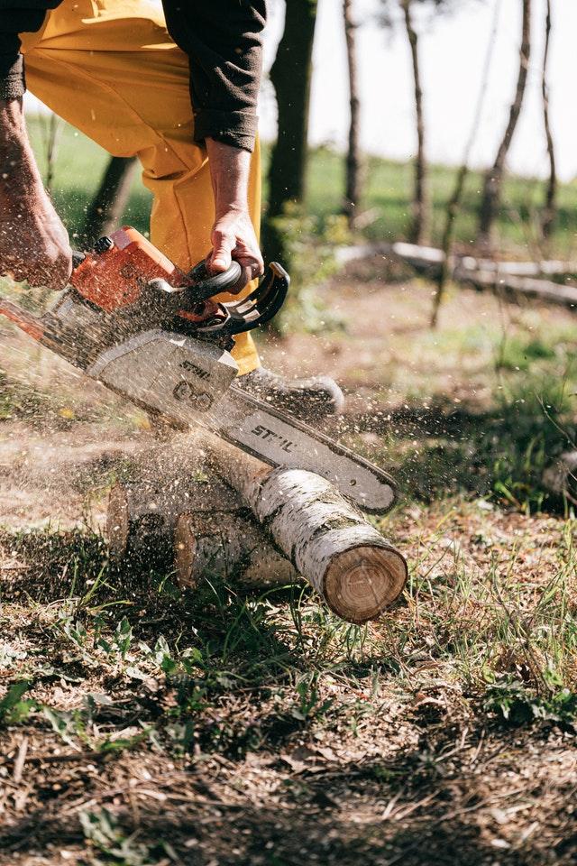 5 Best Arborists in Oklahoma City