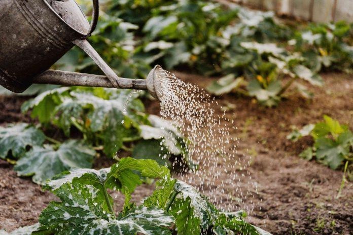 5 Best Gardeners in Milwaukee, WI