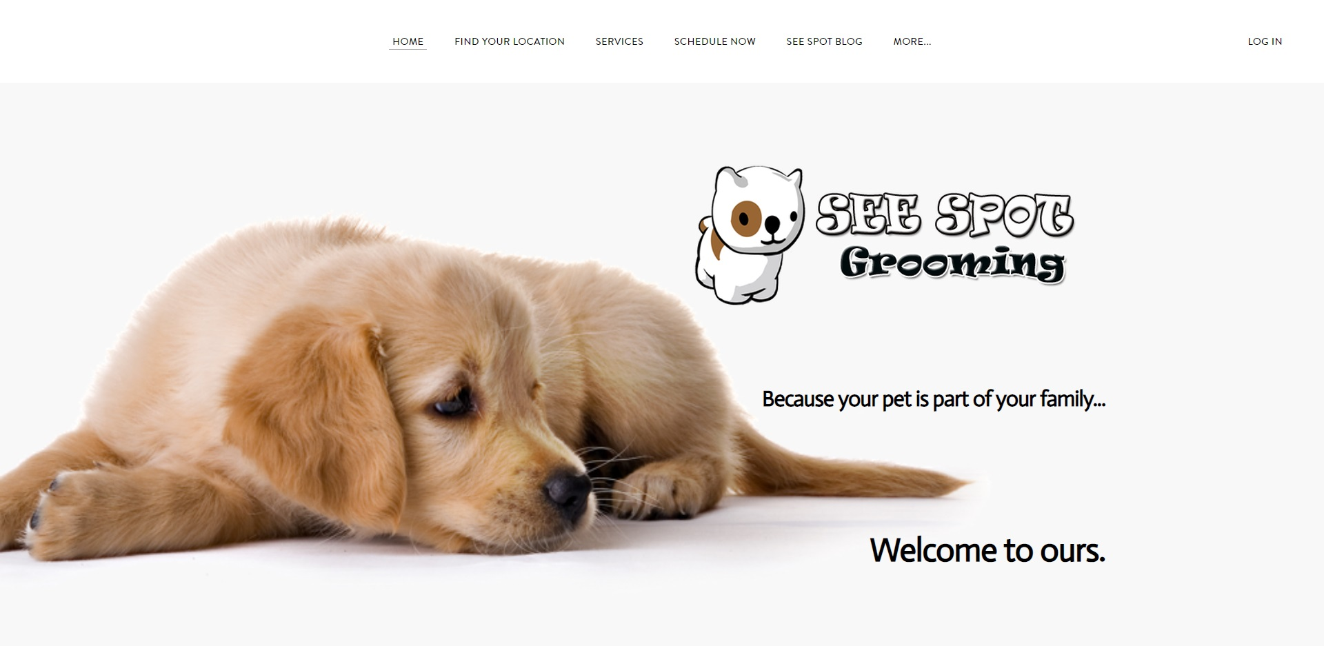 Louisville, KY Best Doggy Day Care Centres
