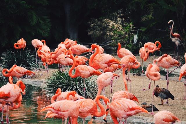 5 Best Aquariums and Zoos in Atlanta