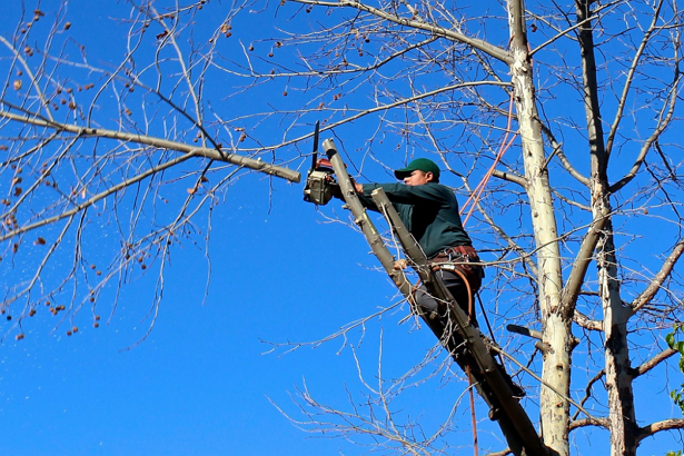 Best Arborists in Atlanta