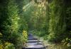 Best Hiking Trails in Portland