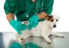 Best Pet Care Centre in Detroit