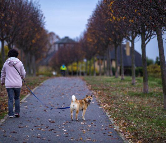 Best Dog Walkers in Nashville, TN