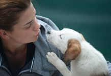 Best Doggy Day Care Centers in Seattle, WA