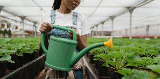 Best Gardeners in Baltimore, MD