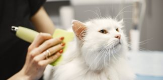 Best Pet Care Centers in Baltimore, MD