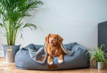 Best Pet Care Centers in Washington, DC