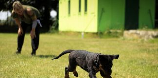 5 Best Doggy Daycare Centres in Boston, MA