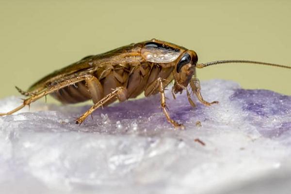 Pest Control Companies Memphis