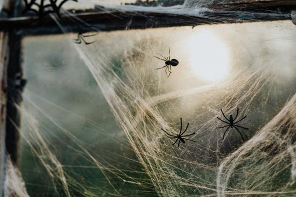 Top Pest Control Companies in Memphis