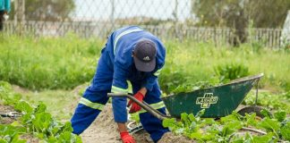 Best Gardeners in Boston, MA