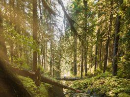 5 Best Hiking Trails in Detroit